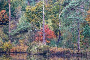 Fotocursus:  via Natuurfotoworkshop.nl